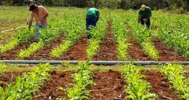 Comunicado de la Comisión Nacional de Justicia y Paz,  sobre Agricultura Familiar
